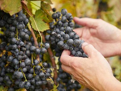 Veritas Vineyard & Winery
